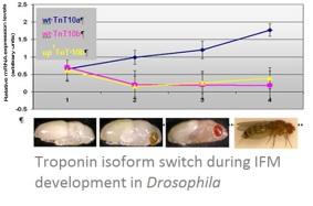 isoform